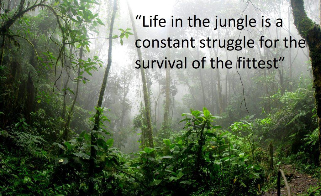 Jungle Quotes