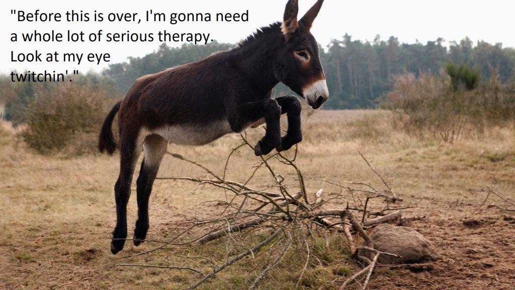 Funny Donkey Quotes