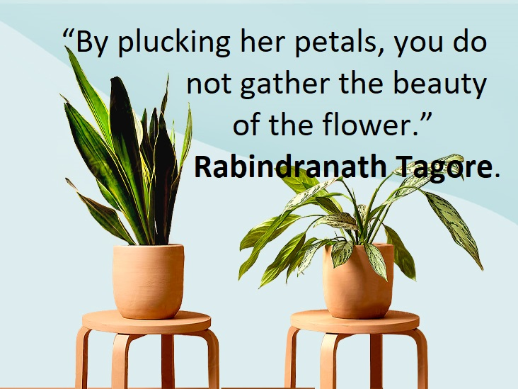 Quotes about Plants